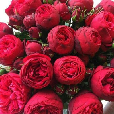 bijunine roze